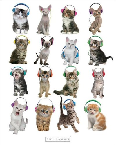 Keith Kimberlin (Kittens Headphones) - Mini Poster - 40cm x 50cm
