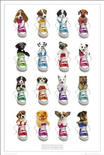 Keith Kimberlin (Sneakers) - Maxi Poster - 61cm x 91.5cm