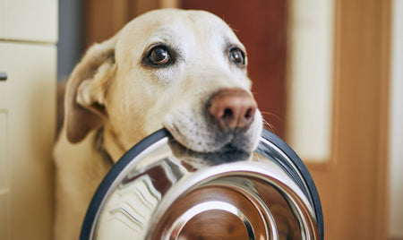 Build a Better Pet Food Bowl
