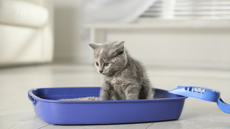 Choosing The Right Cat Litter: Why It Really Does Matter