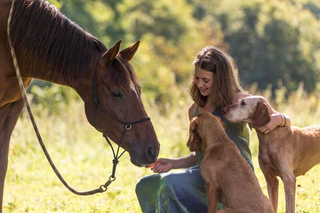 Horse Poop Can be Toxic To Dogs!