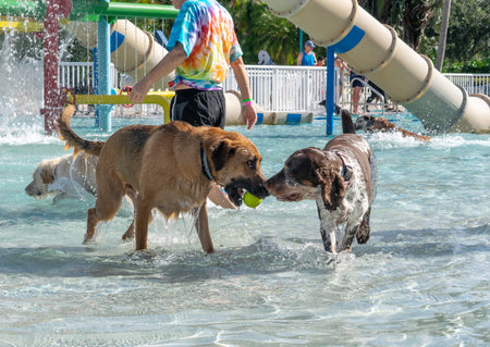 Waggin' At The Waterpark!