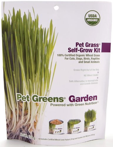 Bell Rock Self-grow Wheatgrass Kit