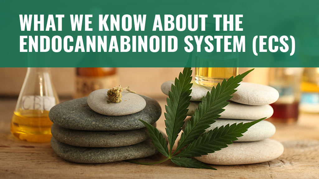 What We Know About the Endocannabinoid System