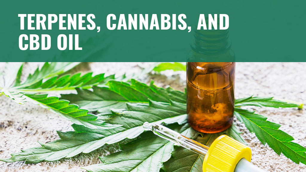 Terpenes, Cannabis, and CBD Oil