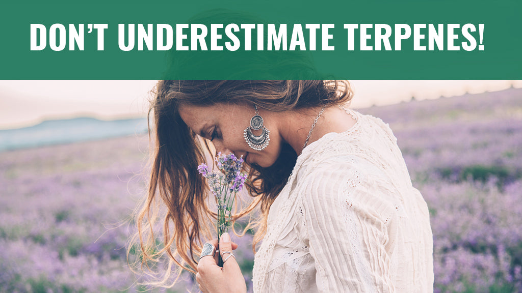 Don't Underestimate Terpenes!