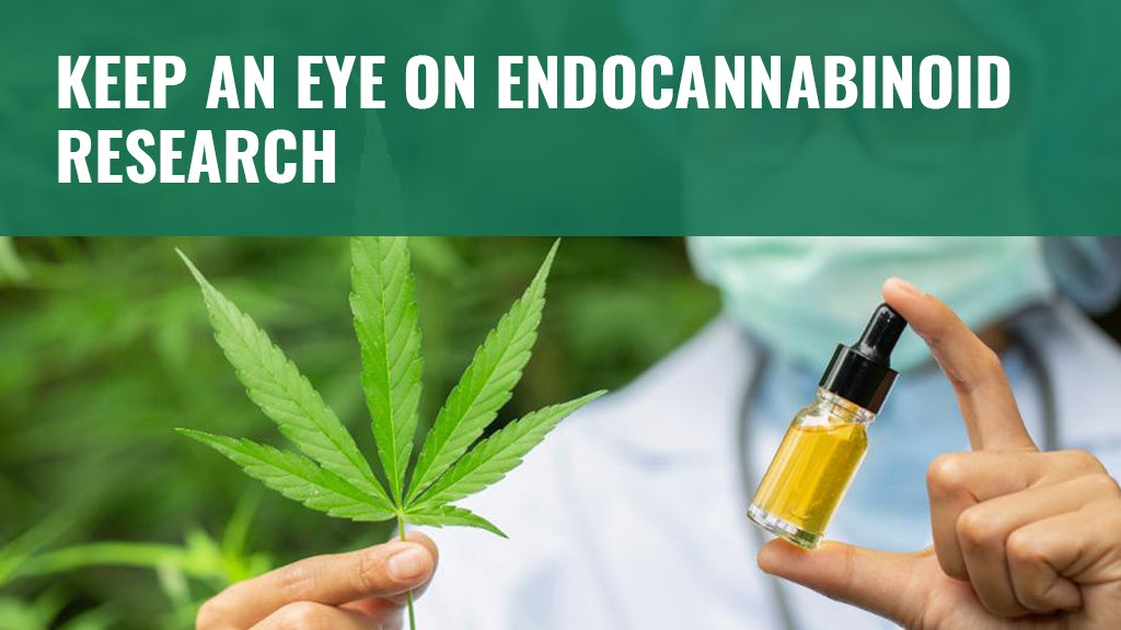 Keep an Eye on Endocannabinoid Research