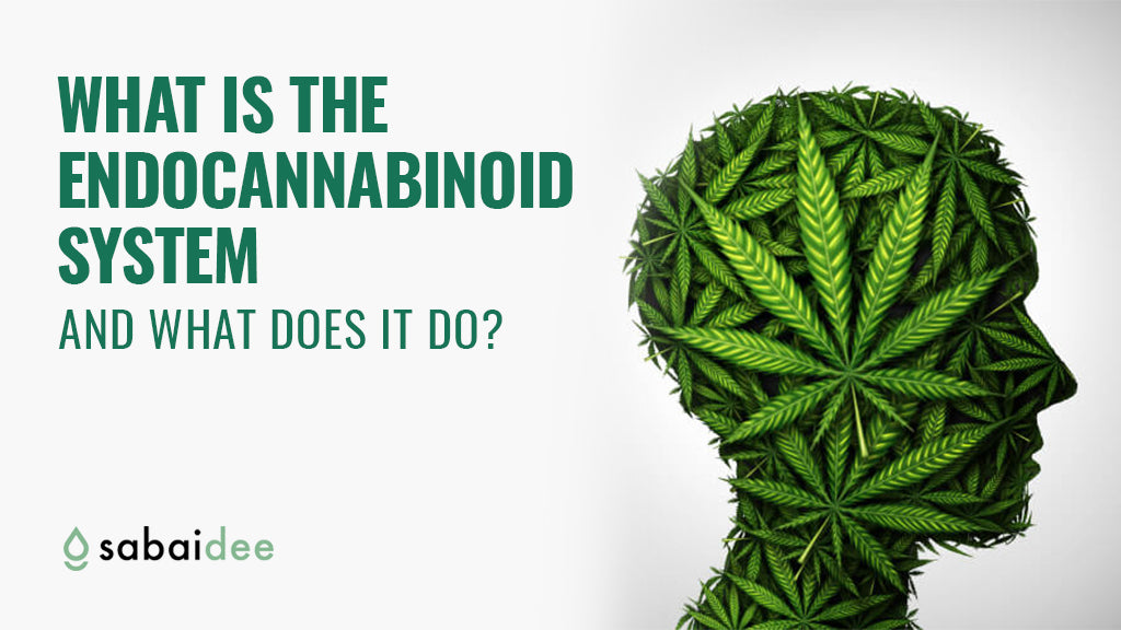 What Is The Endocannabinoid System And What Does It Do?