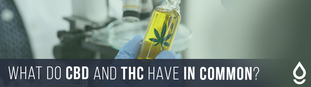 What Do CBD and THC Have in Common