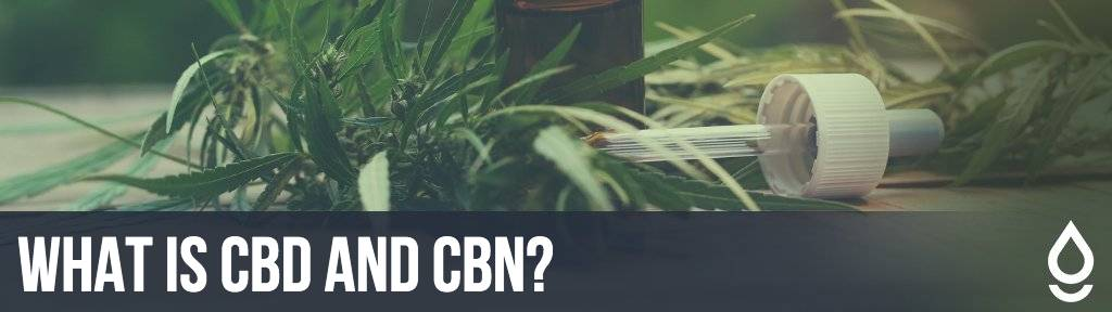 What Is CBD and CBN?