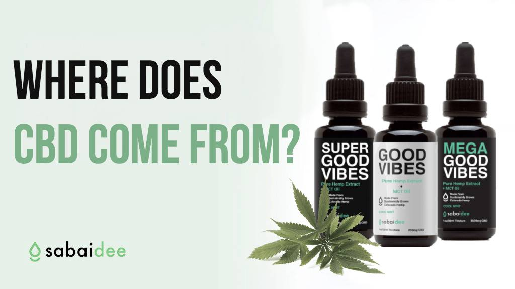 Where does CBD come from ?