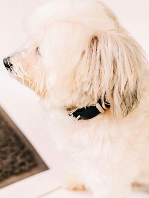 Voyej Dog Collar Black - MORE by Morello Indonesia
