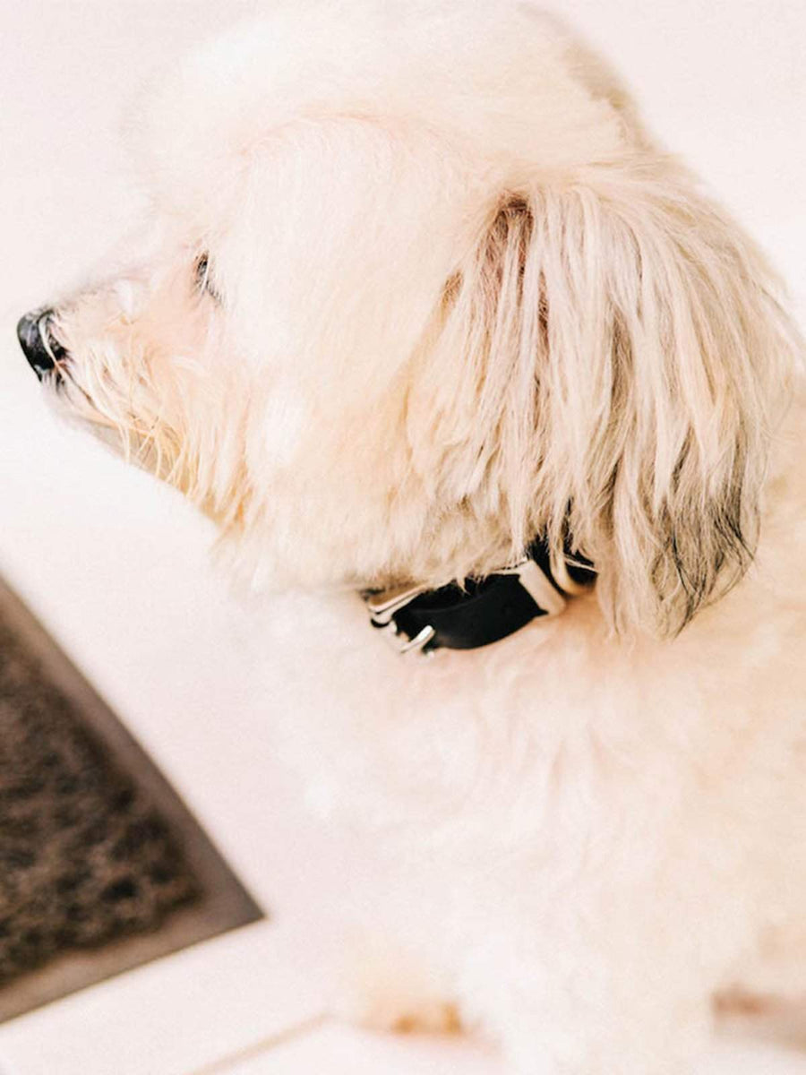 Voyej Dog Collar Black-Small Goods-Voyej-Small-MORE by Morello
