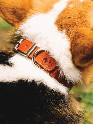 Voyej Dog Collar Chestnut-Small Goods-Voyej-Small-MORE by Morello