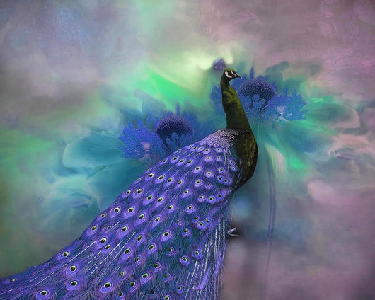 Magnificent Bird Diamond Painting