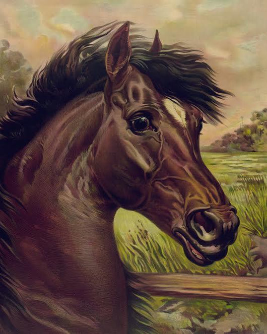 Majestic Stallion Diamond Painting