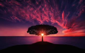 Sunset Tree Alone
