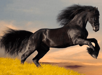 Black Horse Diamond Painting