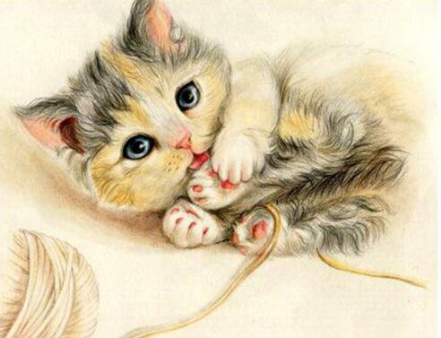 Cuddly Kitten Diamond Painting