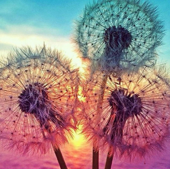 Dandelion Diamond Painting
