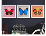 DiamondXpres Butterfly Diamond Painting