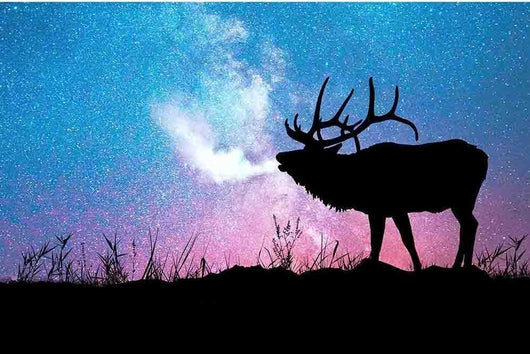 Moose Starry Night