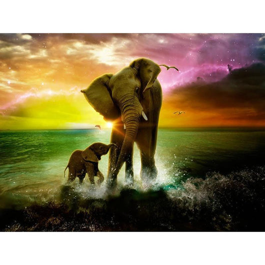 Sunset Sea Elephant