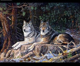 Two Wolves Resting