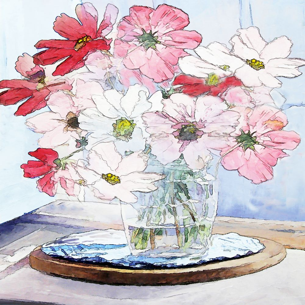 Ian Ledward, 'Pink and White Cosmos'