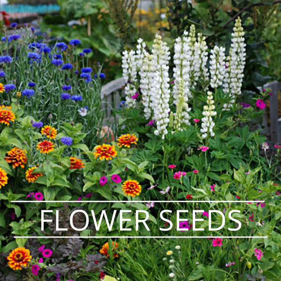 FLOWER SEEDS- NON GENETICALLY MODIFIED