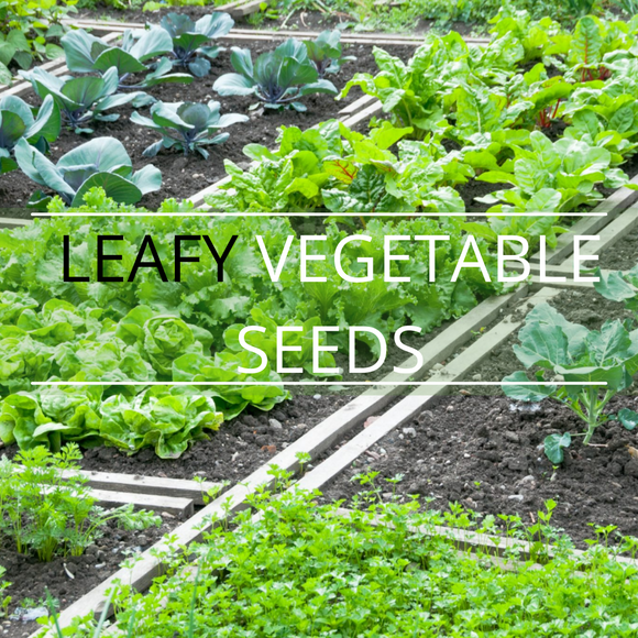 LEAFY VEGETABLE SEEDS- NON GENETICALLY MODIFIED
