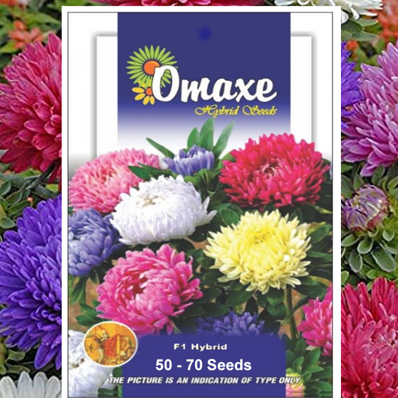 Aster mixed Seeds (Hybrid)- Buy Aster mixed Flower Seeds Online India