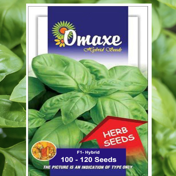 Basil Seeds (F1 - HYBRID)- Buy Basil Seeds Online India