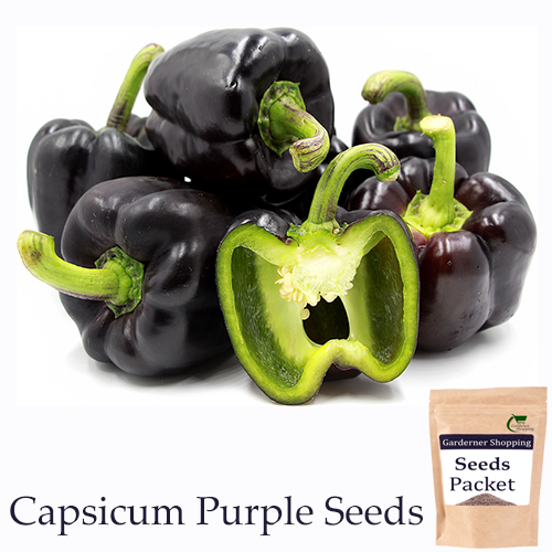 Capsicum Purple Seeds  (Open Pollinated)- Buy Capsicum Purple Seeds Online India - Gardenershopping