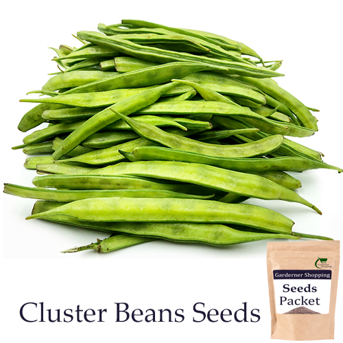 Cluster Beans Seeds (Open Pollinated)- Buy Cluster Beans Seeds Online India - Gardenershopping