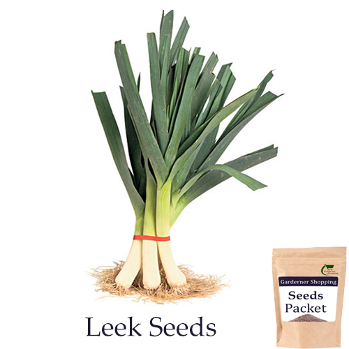 Leek Seeds- American (Open Pollinated)- Buy Leek Seeds Online India