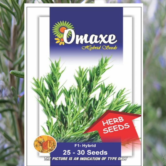 Rosemary Seeds (Hybrid)- Buy Rosemary Seeds Online India