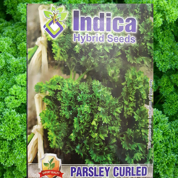 Parsley Moss Curled Seeds (Open Pollinated)- Buy Parsley Seeds Online India