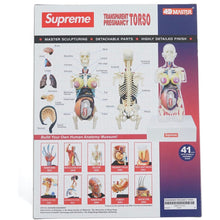 Supreme - Female Anatomy Model - Clear