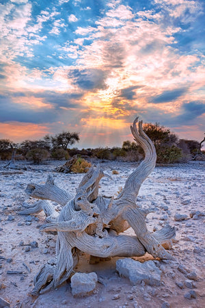Desert Dance - Florida - USA