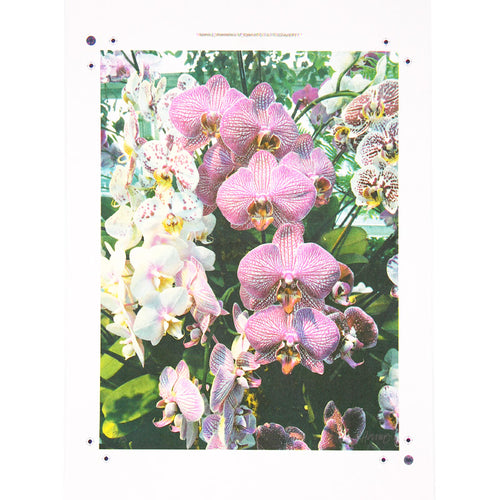 Pink Orchids - Risograph Print