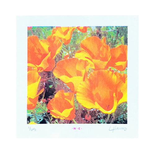 Super Bloom Poppies - Risograph Art Print - Next Chapter Studio