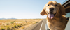 How To Keep Your Dog Safe On Road Trips