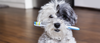 9 Ways To Clean Your Dog's Teeth That They'll Actually Enjoy