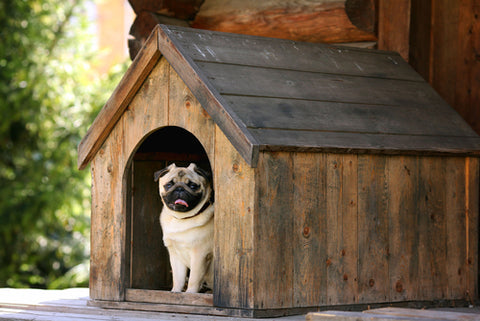How To Keep Outdoor Pets Safe pug in wooden dog house