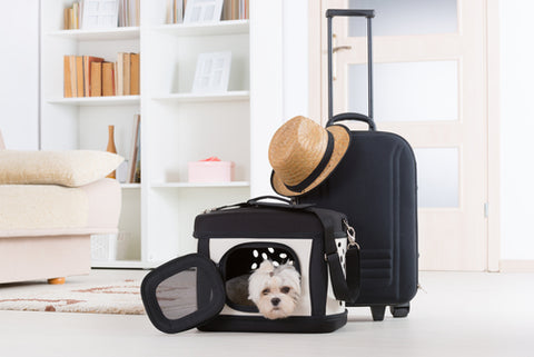 How To Bring Your Dog On A Plane luggage next to dog in carrier