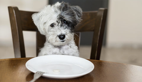Can My Dog Eat That? – What Not To Feed Your Pup dog sitting in front of empty white plate at table