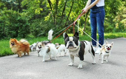 9 benefits of taking your dog for a walk petdinette
