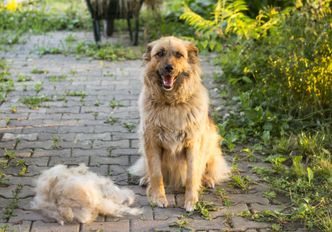 10 Ways Your Life Will Change When You Adopt A Dog dog next to pile of hair