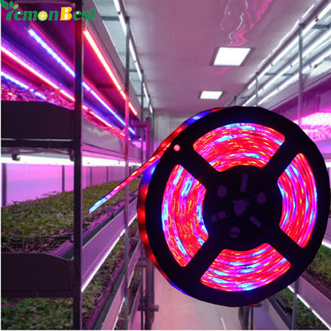 LED Bulbs Plant Led Grow Lamp 5050 - groomin101